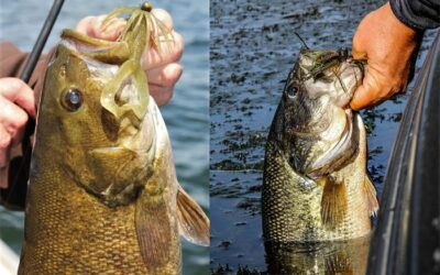 NINE TECHNIQUE SPECIFIC JIGS EVERY SERIOUS BASS FISHERMAN NEEDS